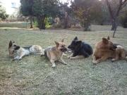 L-R Fenn, Tiny, Tessa, Tanus