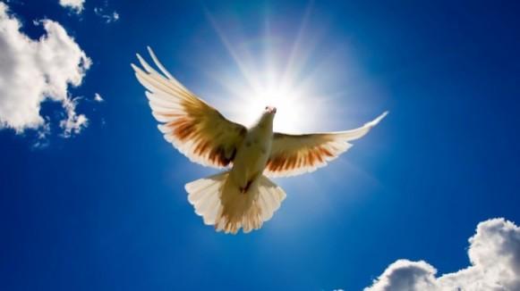 dove in sky 1