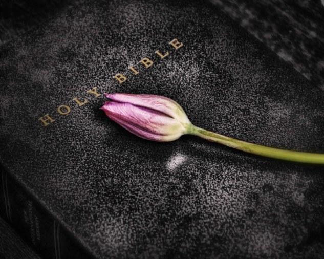 bible tulip