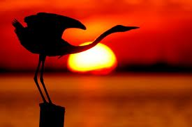 red sunset bird