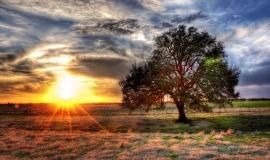 sunset technicolor tree