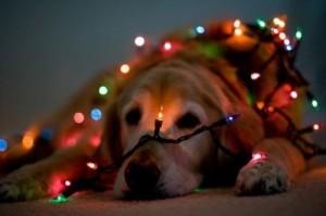 christmas dog 20