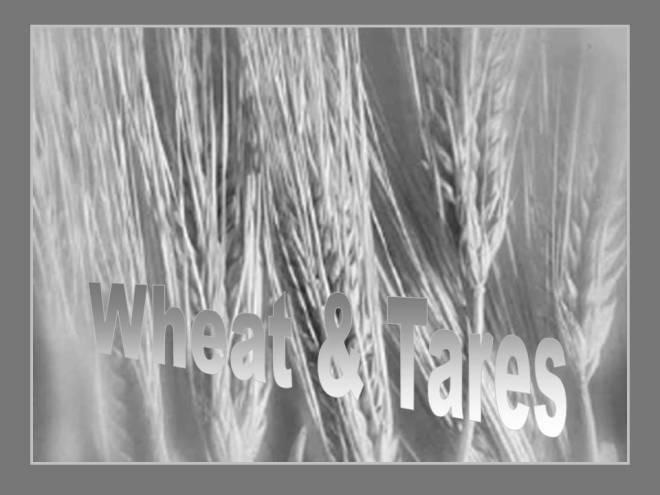 WheatAndTares