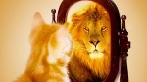 Doubt cat & lion